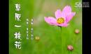 楠楠亚虎娱乐,亚虎娱乐app,亚虎777娱乐老虎机《草原一枝花》乌兰图娅原香草专辑