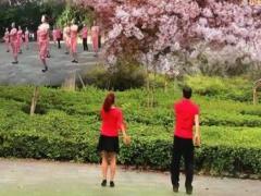夫妻广场舞 初学者有氧瘦身操 背面演示