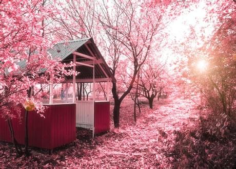 粉红色的回忆
